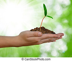 growing green plant in hand on green background