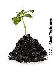 growing green plant in mound of soil - Close up image of...
