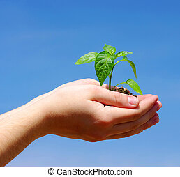 Growing green plant in the hands on sky