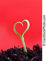 Growing love concept