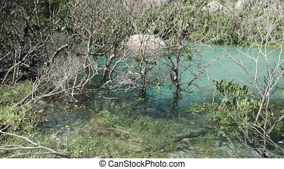 Growing mangroves in a turquoise water - A still shot of...