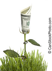 Growing Money Rose. Conceptual Image