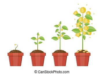 Growing money tree. Stages of growing.