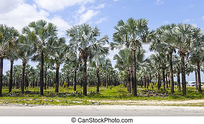 Growing Palm trees in Florida