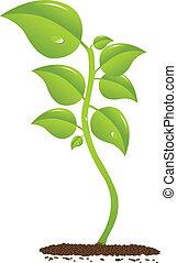 Beautifull growing plant