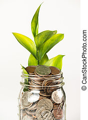 Growing plant from a jar full of coins