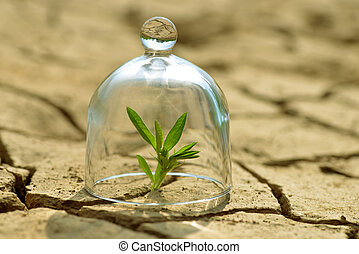 Growing plant in a glass on dry cracked earth.