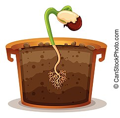 Growing plant in clay pot illustration