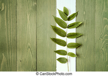 Growing plant over wooden background