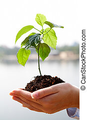 Growing plant - Close-up of fresh branch with leaves in soil...