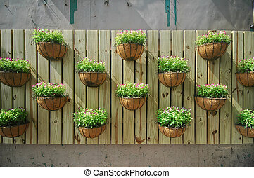 growing plants on a wooden wall