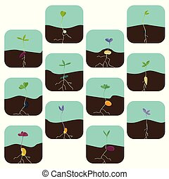 Growing seeds illustration