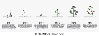 Growing stages of plant - Growing plant stages. Seeds, ...