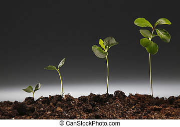 growing - studio shot of the plant growing