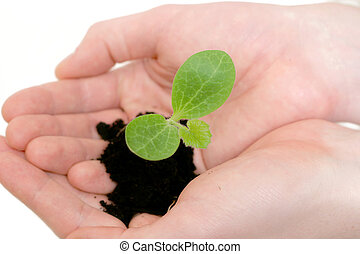 Growing - Hands holding a small plant