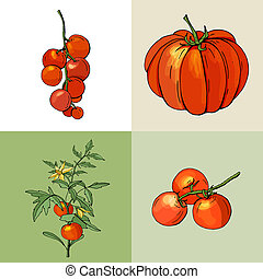 Growing tomatoes. Fresh red vegetables.