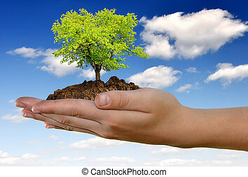 growing tree in hand on the blue sky with clouds