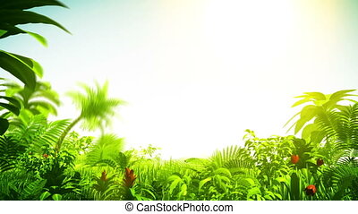 Growing tropical forest with sunshine
