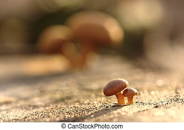 Growing up - Allegoric picture with growing up mushrooms