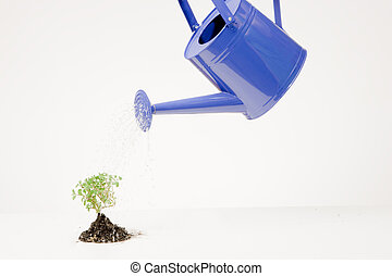 Blue watering can and small tree in soil on white background