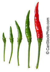 Many size of Thai peppers (bird chilli) isolated on white