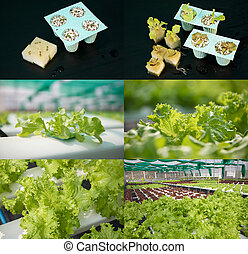 Growing vegetables with hydorponics