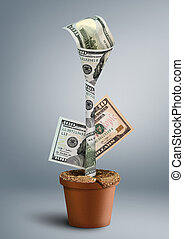 growing wealth creative concept, money as flower in pot