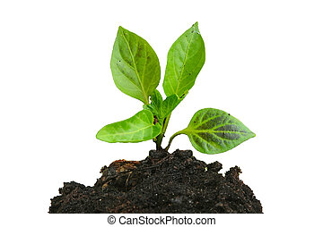 Growing young green plant and soil isolated on white