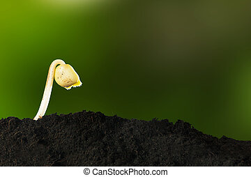 Growing young plant in morning sunlight on nature background