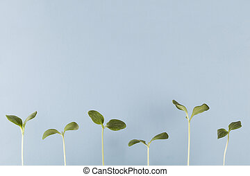 growing young plants on blue background