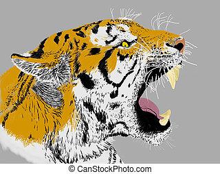 Growling Siberian Tiger