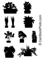 grown, decoratief, stijl, binnen, container, plat, plat, woning, pot, kantoor, vrijstaand, illustratie, spotprent, plant, planten, of, groene achtergrond, silhouettes., witte , plant.