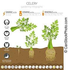 grows., tuinieren, heilzaam, grafisch, eigenschappen, plat, ...