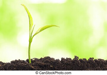 growth concept with growing young plant in nature