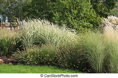 growth of various species of ornamental grass