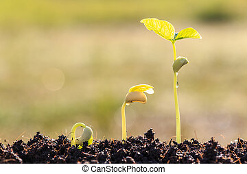 Growth of young green plant in soil