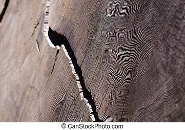 Growth rings