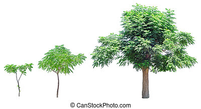 Growth stages of tree