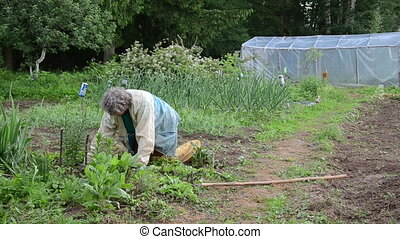 grandmother grub weeds by hand kneeling between beds dull summer day
