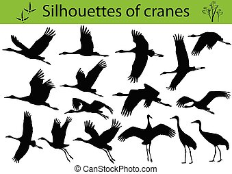 grues, silhouettes