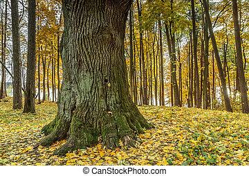 grueso, árbol