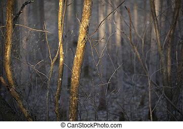 grueso, bosque, árboles