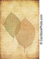 grunge, achtergrond, met, autumn leaves