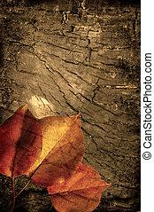 grunge, autunno, fondo