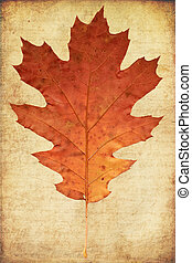 grunge background with oak autumn leave - grunge background...