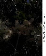 grunge, bakgrund, med, blomningen