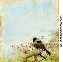 grunge, branche, fond, oiseau