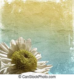 Grunge daisy background - Detailed grunge style background...