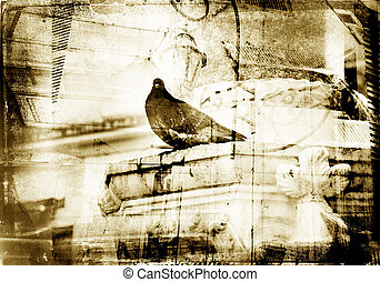 Grunge dove with textured border