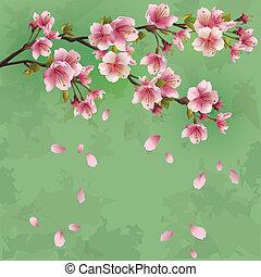 grunge, fiore, ciliegia, -, giapponese, albero, sakura,...